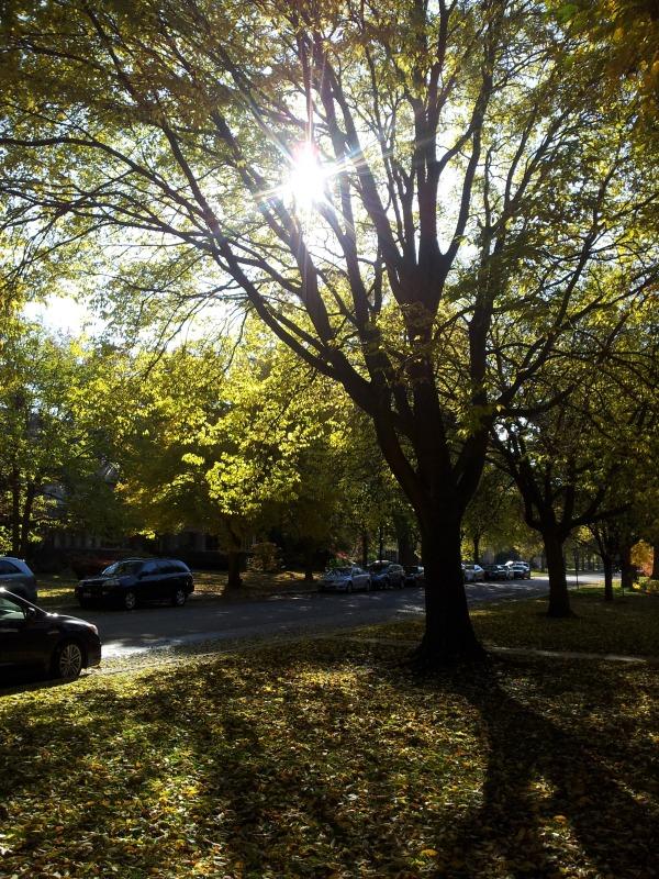 Evanston in November.